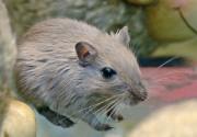 Счетная палата проверила ЦБ: гора родила мышь