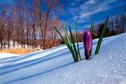 Россия: весна посреди лета