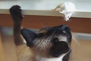 """ЦБ сыграет в """"кошки-мышки"""" по-новому"""