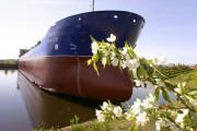 Пароходства выплыли за счет нефти и Арктики