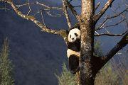 Китай: догнать и перегнать Америку к 2012