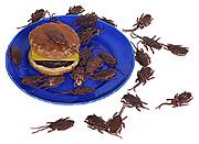 Таракан-бургеры на обед