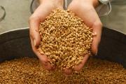 Две беды российского АПК - неурожай и хороший урожай