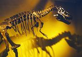 Вымирание динозавров как критерий кризиса