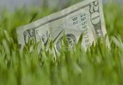 Доллар: снова в рост