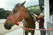 Моногорода: не в коня корм