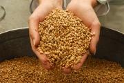 Цены на зерно уступили на бирже