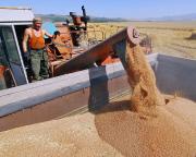Зерно: эмбарго продлили