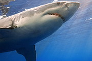 Онищенко против акул турбизнеса